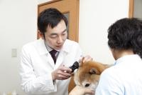 チームの連携が動物医療には必須1