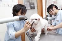 チームの連携が動物医療には必須2