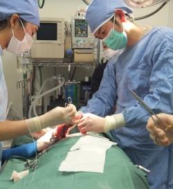 外科療法(当院にて行います)