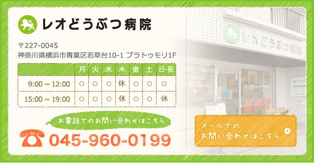 レオどうぶつ病院045-960-0199